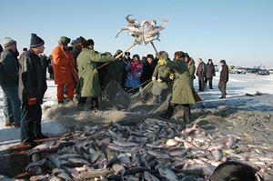 1月9日捕鱼节活动通知