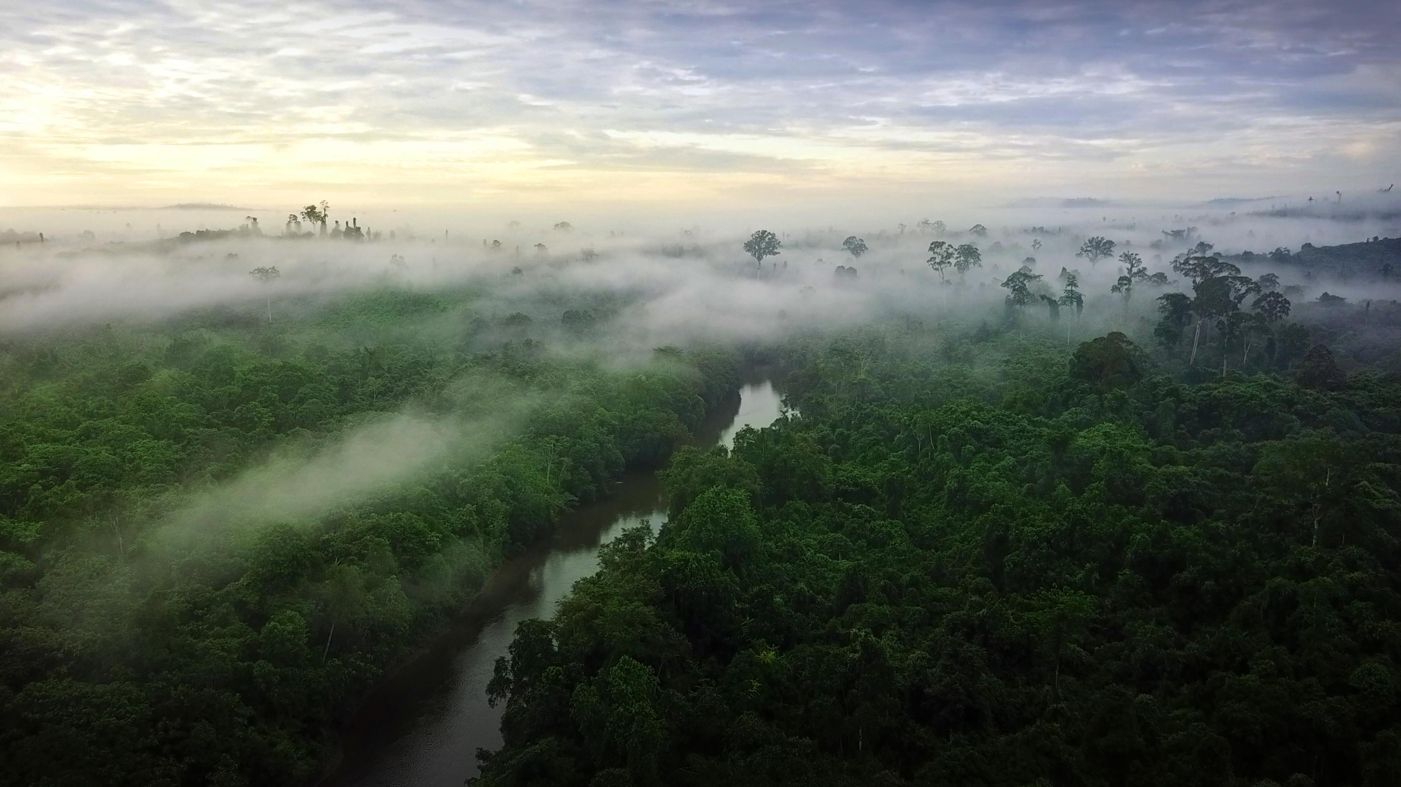 天堂就在此-加里曼丹 PRW-60YBM与我在神秘原始雨林探钓